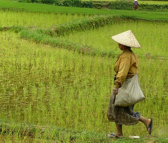 В 2015 г. 277,47 млн селян КНР побывали на заработках в городах