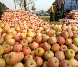 Удвоился российский импорт китайских яблок