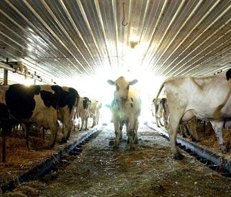 Украина наращивает экспорт молочной продукции в КНР