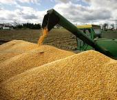 Валовой сбор зерна в Поднебесной вырос на 2,4%