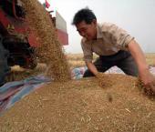 В Поднебесной дешевеет сельскохозяйственная продукция