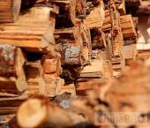Обзор лесной отрасли Китая