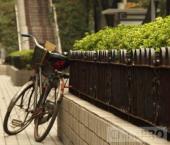 Китай колесах. Обзор велосипедной промышленности Китая за 2008 г.