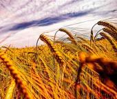 Дефицит торговли сельхозпродукцией КНР достиг $41,5 млрд