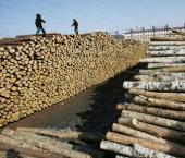 Валовая прибыль лесного хозяйства Китая достигла $1,08 трлн