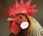 Китай снял ограничения на импорт птицы из США