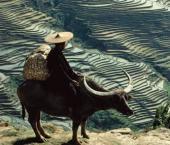 Госпредприятия КНР предоставят $457,14 млн бедным уездам