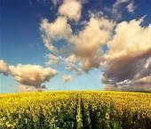 Китай наращивает производство экологически чистых продуктов питания