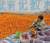 Объем вывоза китайских фруктов в Россию увеличился