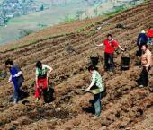 Через десять лет в КНР не будет бедных селян