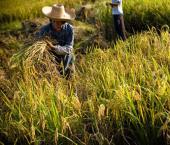 КНР вложила 1,84 млрд юаней в сельскохозяйственные проекты