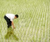 На Хайнане обнаружены почвы с большим содержанием селена